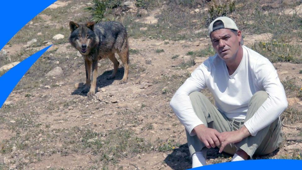 Dokument Frank a bojoví psi