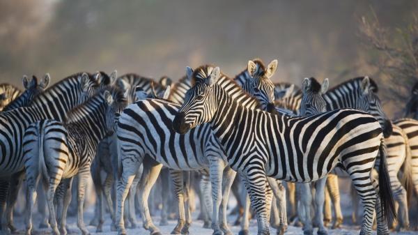 Rok v africké divočině