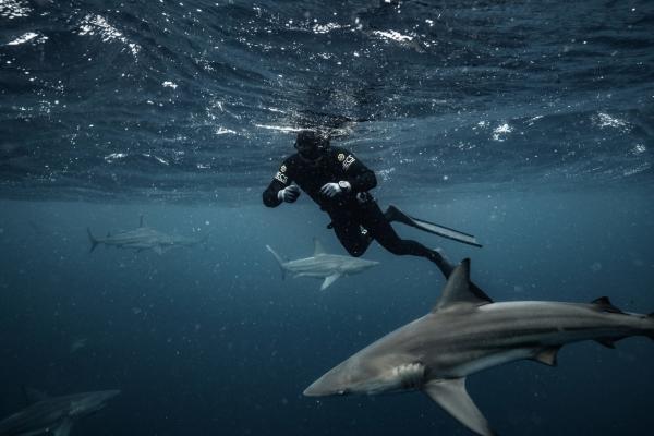 Hledání ztraceného žraloka