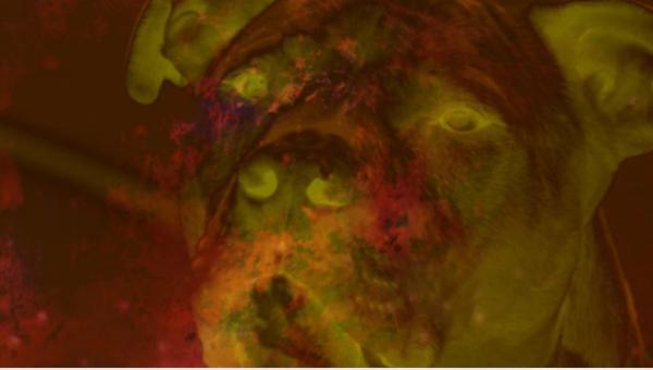 Sleduj online  Americká monstra na KinoSvět!